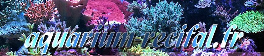 les aquariums r�cifaux