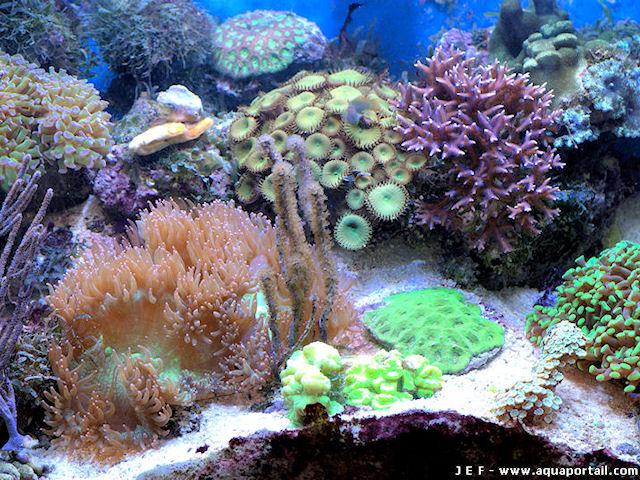 nano-aquarium r�cifal