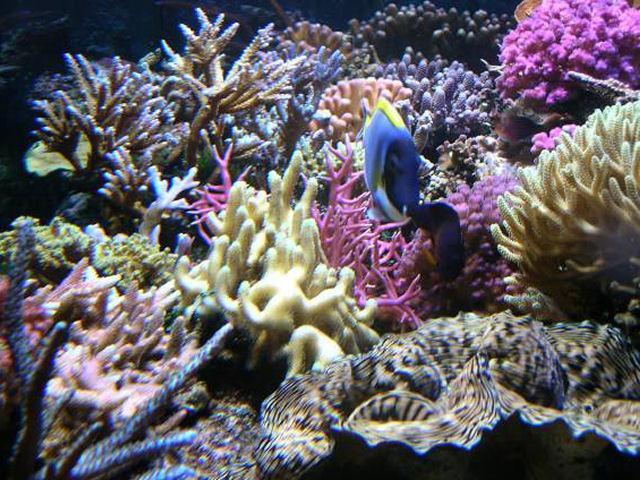 un aquarium récifal type