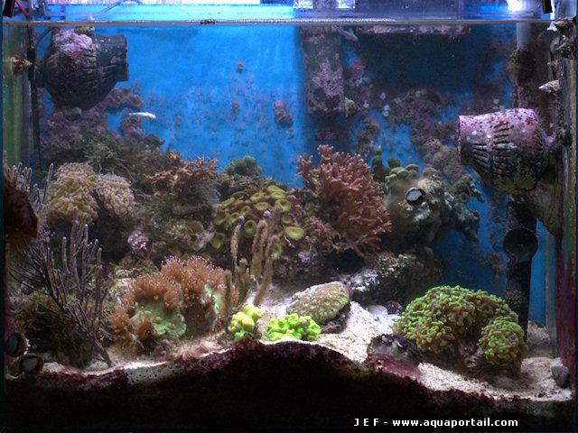 Aquarium eau de mer m thode jaubert for Eau de mer aquarium